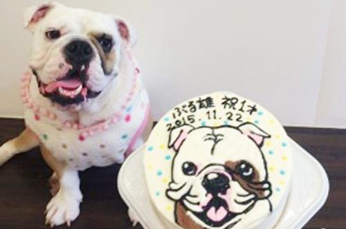 【ありがとうの声】犬用似顔絵ケーキでワンちゃん大喜びの誕生日祝い