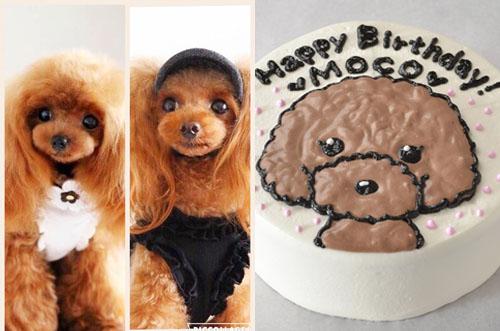 【吉祥寺×居酒屋】ワンちゃん歓迎&犬用ケーキでお祝い可能なAZABU屋