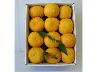 ゆずバラ詰め 約1.4kg12~15個(良品)【食品 > フルーツ・果物】記念日向けギフトの通販サイト「バースデープレス」