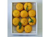 ゆず大玉10個(優品)【食品 > フルーツ・果物】記念日向けギフトの通販サイト「バースデープレス」