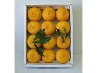 ゆず大玉12個(優品)【食品 > フルーツ・果物】記念日向けギフトの通販サイト「バースデープレス」