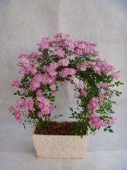 つるバラ アーチ仕立て テラコッタ植え【花 フラワーギフト プレゼント お祝い 誕生日 贈り物】