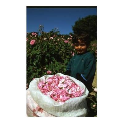ROSENSEダマスクローズウォーター【美容 自然 癒し トルコ 誕生日 バースデー ギフト 贈り物 プレゼント お祝い】の画像3枚目