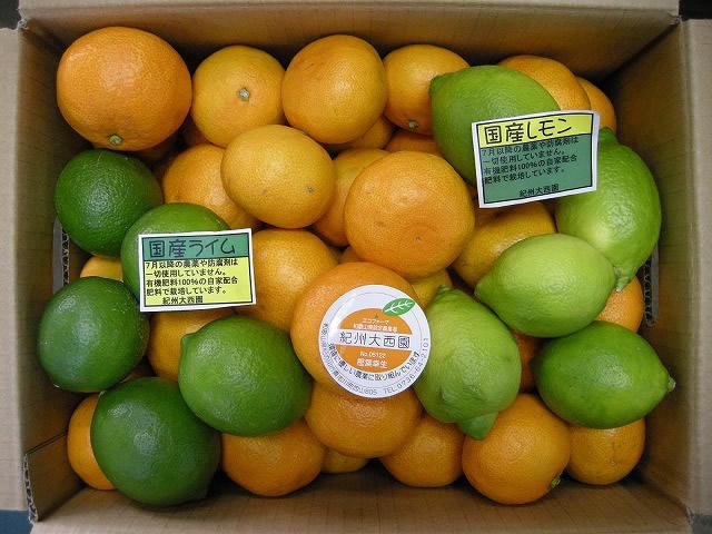 【送料無料】グリーンセット シークワーサー・国産レモン・国産ライム5kgセット【誕生日 バースデー プレゼント 贈り物 ギフト お祝い】の画像2枚目