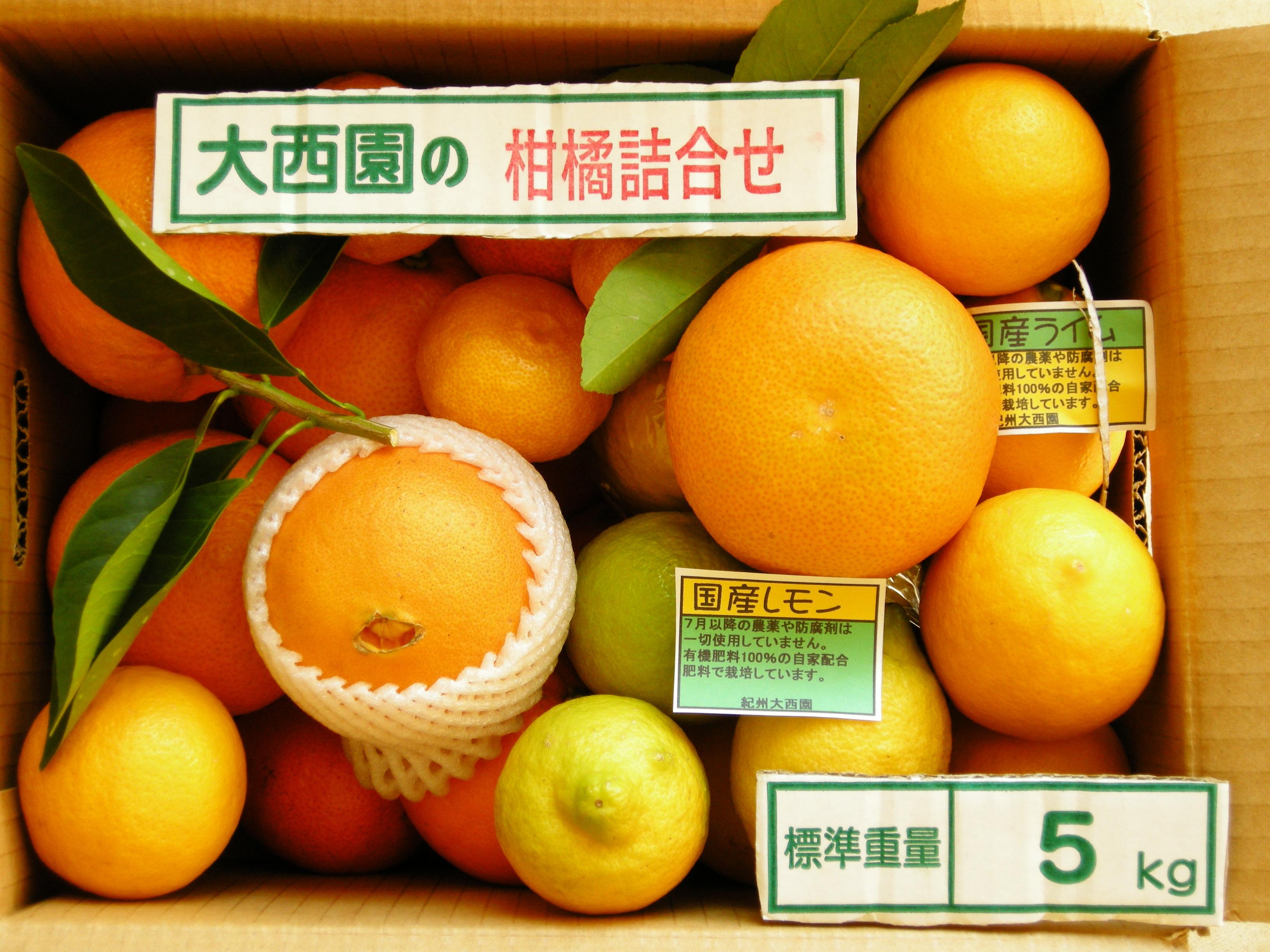 紀州大西園の季節の柑橘詰め合わせおおまかせセット【誕生日 バースデー プレゼント 贈り物 ギフト お祝い】の画像1枚目