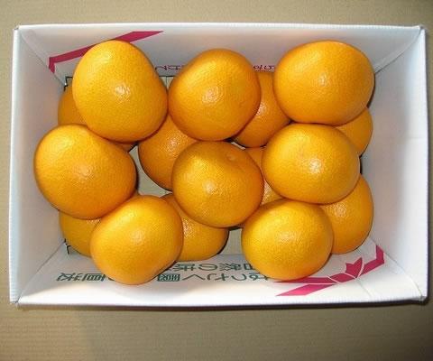 はっさく5kg【果物 フルーツ 贈答 誕生日 バースデー プレゼント 贈り物 ギフト お祝い】の画像1枚目