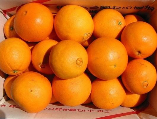 ネーブルA5kg【果物 フルーツ 贈答 誕生日 バースデー プレゼント 贈り物 ギフト お祝い】の画像1枚目