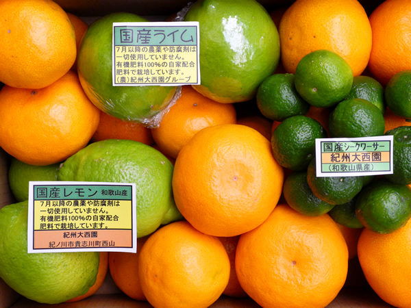 【送料無料】グリーンセット シークワーサー・国産レモン・国産ライム3kgセット【誕生日 バースデー プレゼント 贈り物 ギフト お祝い】の画像1枚目
