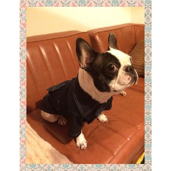 小型犬 犬の服 デニム カウボーイシャツ ::2942【バッグ・小物・ブランド雑貨】記念日向けギフトの通販サイト「バースデープレス」