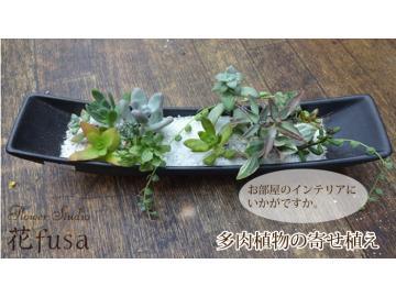 多肉植物の寄せ植え::3069【バッグ・小物・ブランド雑貨】記念日向けギフトの通販サイト「バースデープレス」