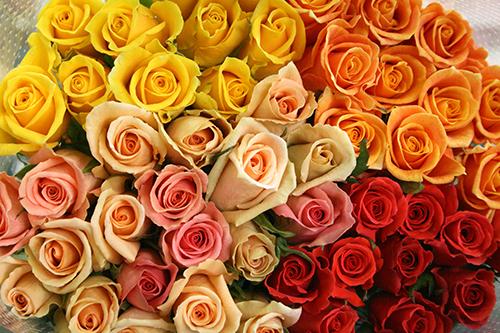 60本のバラでお祝いを!還暦祝い用バラの花束(ミックス60本)