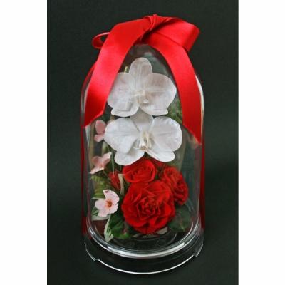 ドーム入豪華な胡蝶蘭と赤いバラのアレンジ慶蝶