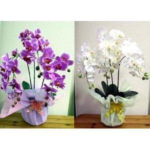 光触媒胡蝶蘭3本立て ホワイト
