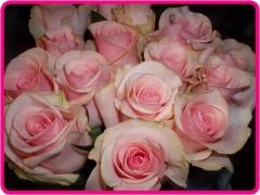 ソフトピンクの大輪バラの花束