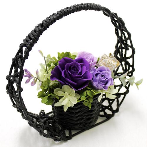 紫乃和(しのわ)
