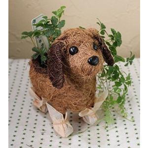 観葉植物シッサスシュガーと可愛いワンちゃん鉢のセット
