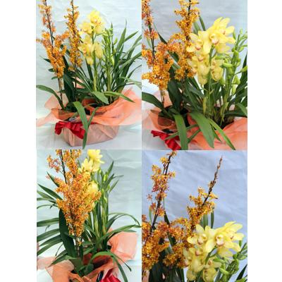 季節の寄せ鉢【花 フラワーギフト プレゼント お祝い 誕生日 贈り物】