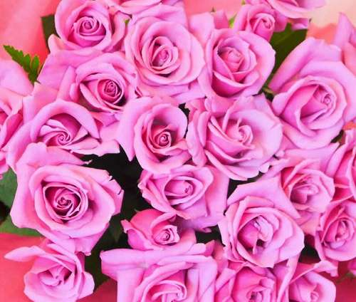 【送料無料】ピンクバラの花束(生花)【花 フラワーギフト アレンジメント フラワー 誕生日】の画像1枚目