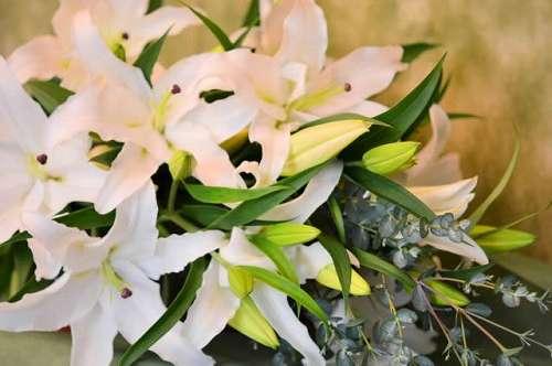 【送料無料】白ユリの花束(生花)【花 フラワーギフト アレンジメント フラワー 誕生日】の画像1枚目