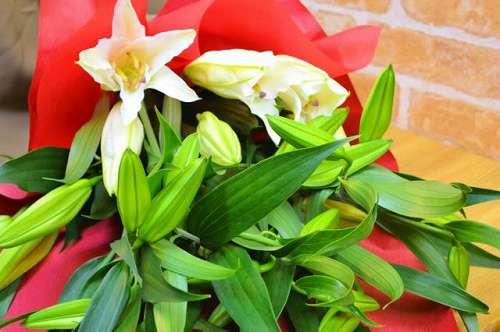 【送料無料】カサブランカのみの花束【花 フラワーギフト アレンジメント フラワー 誕生日】の画像1枚目