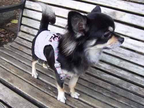 ドットオーバーオールスカート【誕生日 贈り物 プレゼント お祝い ペット 洋服】の画像1枚目