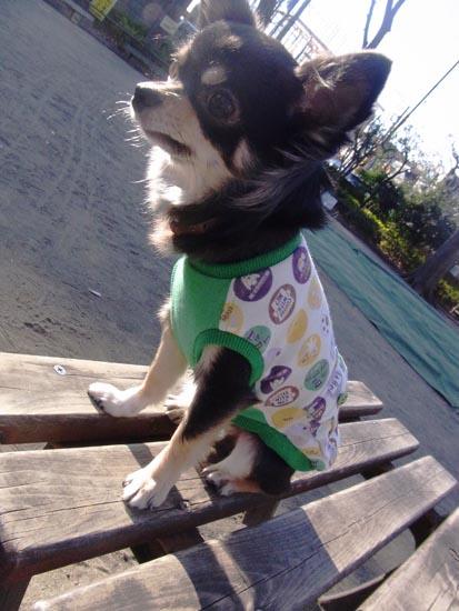 スマイルポケットTシャツグリーン【誕生日 贈り物 プレゼント お祝い ペット 洋服】の画像1枚目