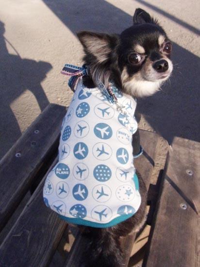 プレインTシャツ ブルー【誕生日 贈り物 プレゼント お祝い ペット 洋服】の画像1枚目
