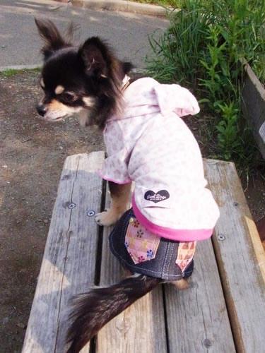 和柄デニムスカート【誕生日 贈り物 プレゼント お祝い ペット 洋服】