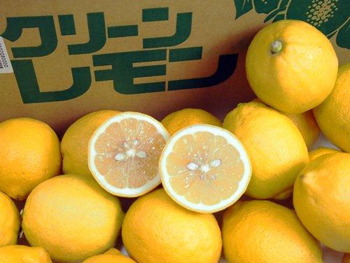 愛媛/香川/広島産 レモン M又はL サイズ 10キロの画像1枚目