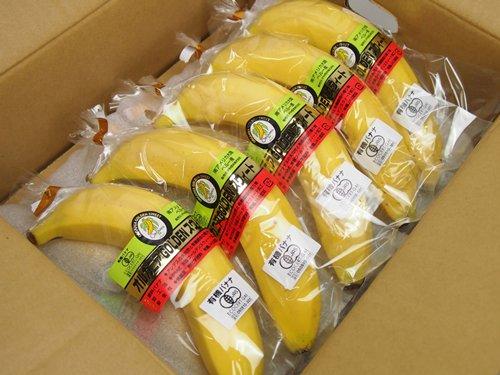 【送料無料】【ポイント10倍】ペルー産 JAS認定有機バナナ 「オルガニアゴールデンスイート」 1箱 10本入の画像1枚目