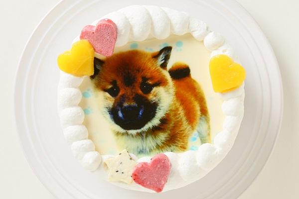 わんちゃん用EWP対応 小型犬用 ワンワン写真ケーキ 4号 12cmの画像1枚目