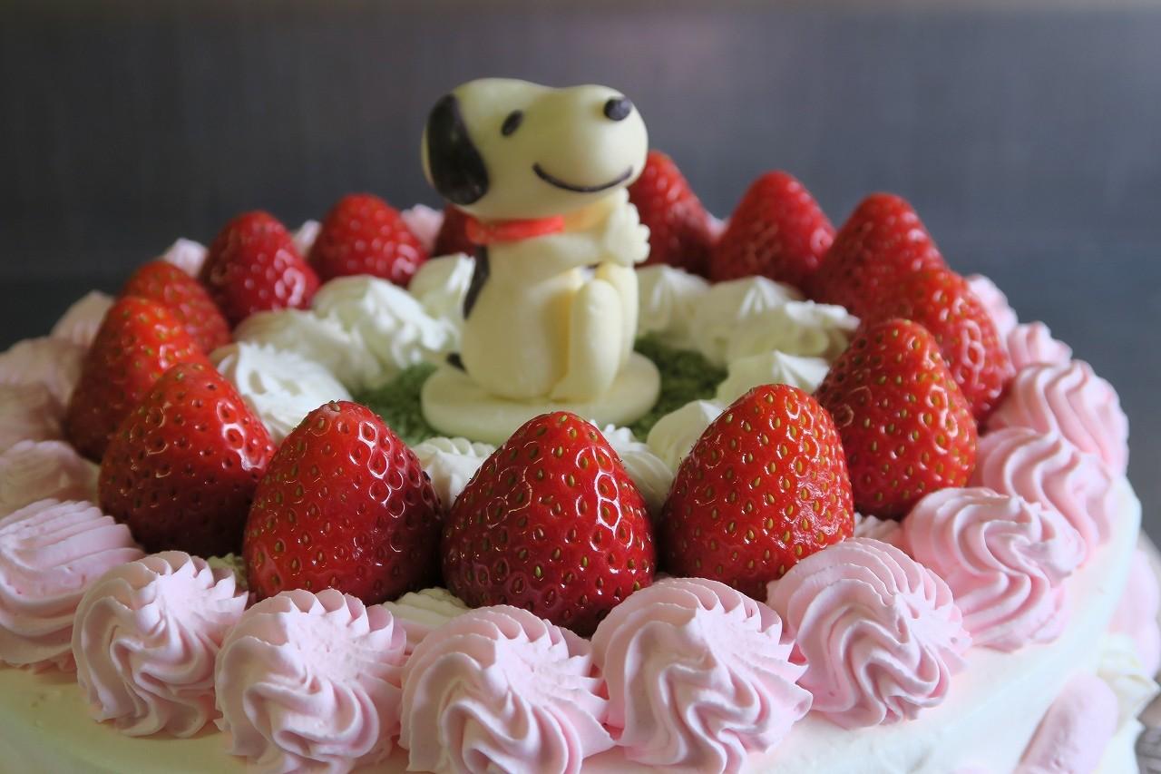 【栃木県栃木市・小山市・佐野市 限定配送】 【送料無料】パーティー用大型ケーキ 丸型