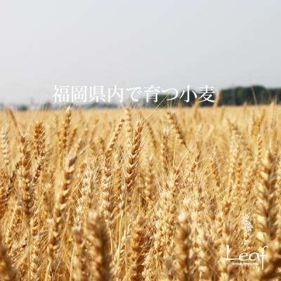 八女抹茶シフォンフロマージュ 11cm (1123)の画像2枚目