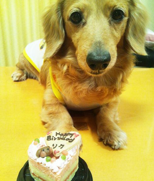 小型犬向け☆ハッピープチLOVEフード お魚のプチケーキ オーダーオプション有り 約6cmの画像3枚目