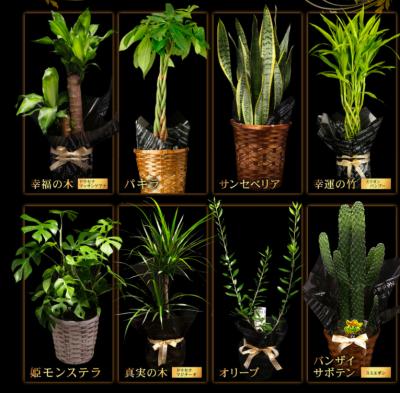 選べる8種の観葉植物