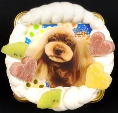 【わんちゃん用】【EWP対応】【12cm 4号】小型犬用 ワンワン写真ケーキの画像5枚目