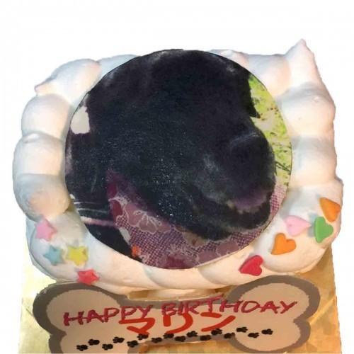 わんちゃん用EWP対応 ミニ ワンワン写真ケーキ 11cm×6cm