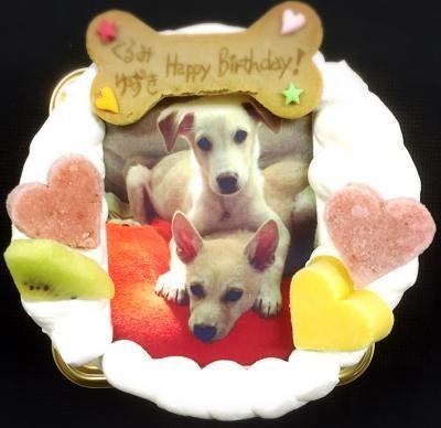 【わんちゃん用】【EWP対応】【12cm 4号】小型犬用 ワンワン写真ケーキの画像4枚目
