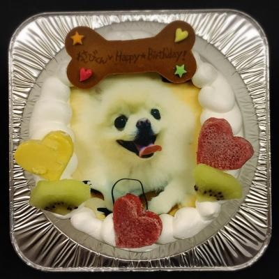 【わんちゃん用】【EWP対応】【12cm 4号】小型犬用 ワンワン写真ケーキの画像6枚目