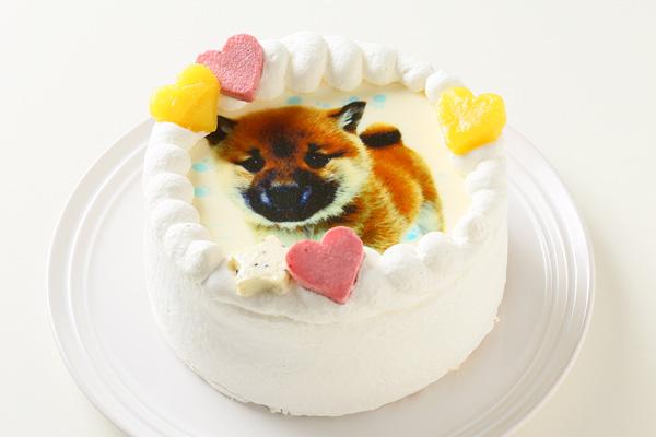 わんちゃん用EWP対応 小型犬用 ワンワン写真ケーキ 4号 12cmの画像2枚目