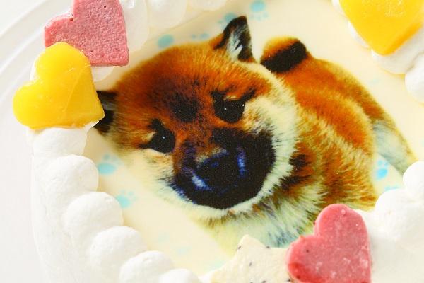 わんちゃん用EWP対応 小型犬用 ワンワン写真ケーキ 4号 12cmの画像6枚目