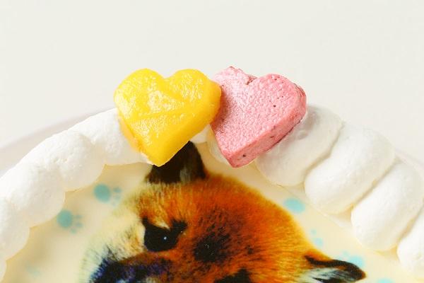わんちゃん用EWP対応 小型犬用 ワンワン写真ケーキ 4号 12cmの画像7枚目
