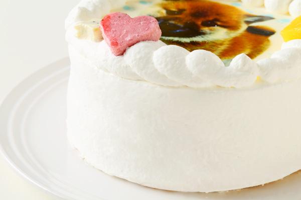 わんちゃん用EWP対応 小型犬用 ワンワン写真ケーキ 4号 12cmの画像8枚目
