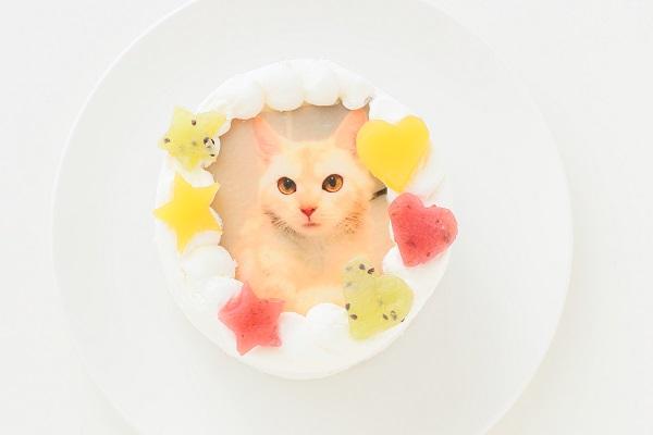 cake.JPサイトのペット用ケーキ