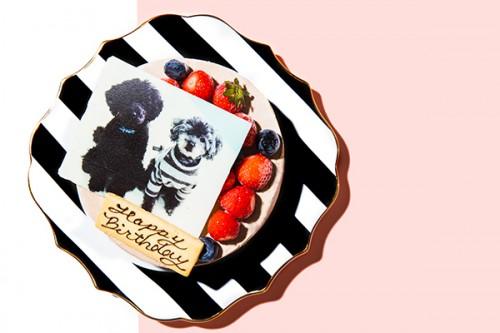 写真ケーキ 生チョコクリームデコレーション 4号 12cm