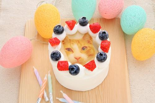 猫の日専用 猫も食べられるケーキ 3号 9cm