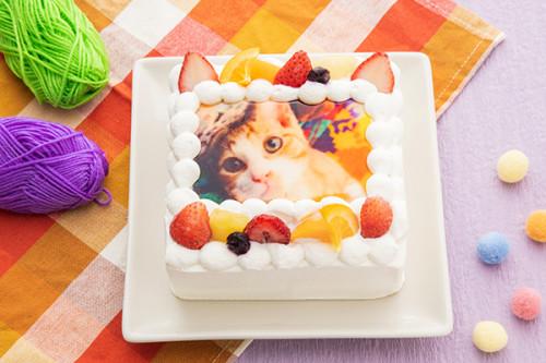 猫の日2020 写真ケーキ生クリーム 4号サイズ 12cm×12cm