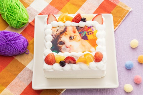 猫耳いちごの写真ケーキ 生クリーム 4号サイズ 12cm×12cm