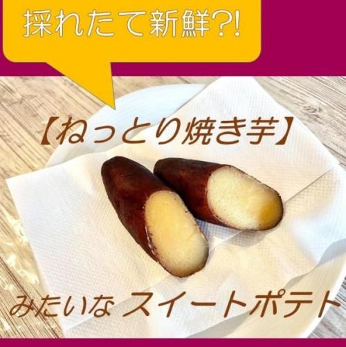 ケーキ屋さんが作った【ねっとり焼き芋】みたいなスイートポテト 6個セット「秋スイーツ2021」